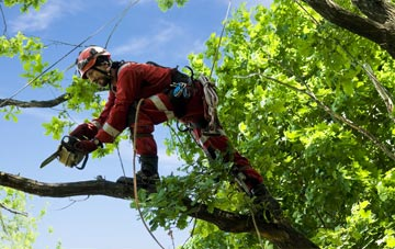 find trusted rated Fermanagh tree surgeons