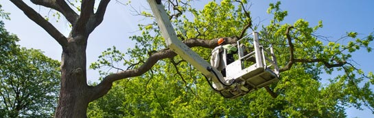 Fermanagh tree surgery services