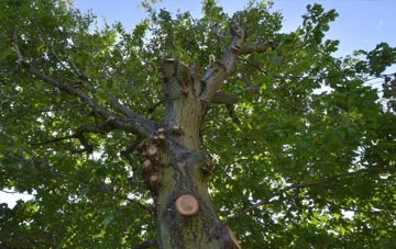 what is Fermanagh tree surgery?
